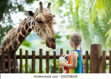 Family feeding giraffe in zoo. Children feed giraffes in tropical safari park during summer vacation in Singapore. Kids watch animals. Little girl giving fruit to wild animal.