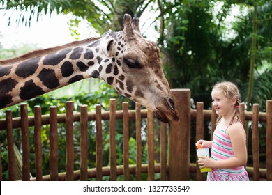 Family feeding giraffe in zoo. Children feed giraffes in tropical safari park during summer vacation. Kids watch animals. Little girl giving fruit to wild animal.