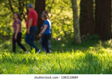 Family fitness and healthy lifestyle concepts. Walking together for good health. Fighting overweight background. Silhouettes of blurry people walking in park. Selective focus on green grass.