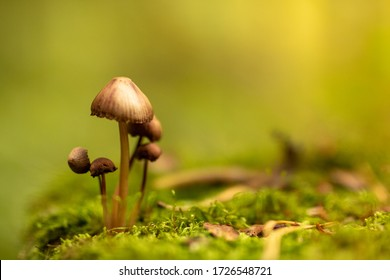 Family of fungi grows up in the forest