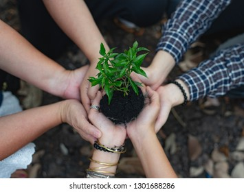 Family gardeners help to plant trees. To reduce global warming Increase oxygen And create balance for the soil, Concept keeping the world green with two hand.