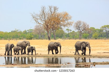 Family herd of elephants walking past a waterhole with a nice reflection in the water against a pale blue sky and bush background.