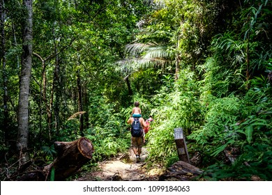 A family hike in the forest at Penang National Park in Penang, Malaysia