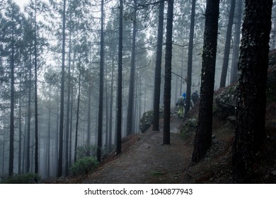 Family of hikers going down trail on cold rainy day in the forest with dense haze. Backpackers group trekking along tall thin trees path. Mysterious, suspense scenery concept
