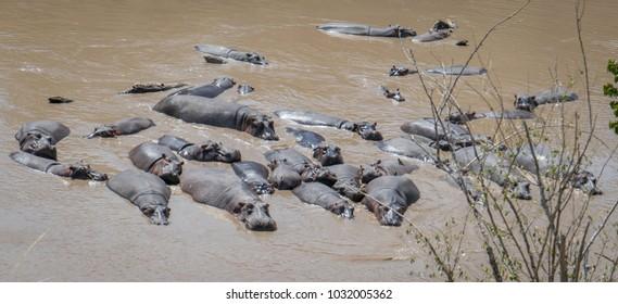 Masai Mara Images, Stock Photos & Vectors | Shutterstock