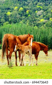 Family of horses in Hogsback, South Africa.