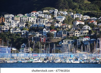 Family houses on a slope near marina full of boats in Wellington, New Zealand