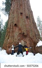 Family hugging sequoia tree