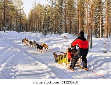 Family in husky dogs sledge in winter snowy forest in Rovaniemi, Lapland, Finland