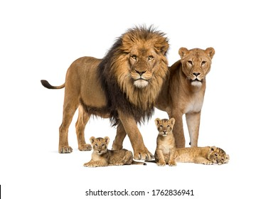 Family of lion, adult and cub, isolated. Wild cat