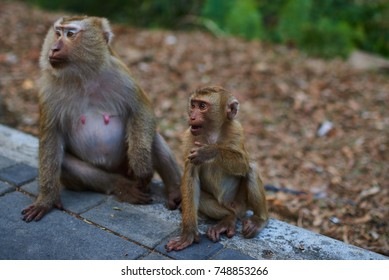 A family of long-tailed macaque, wild monkeys. Wild animal in natural habitat. Asian Monkey or a crab eating macaque sitting around with  nature background.