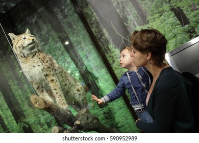 Family looking at tiger in zoological museum