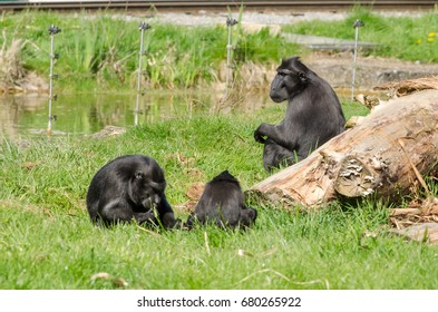 A family of macaques play in the sun