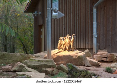 a family of meerkats are under the heat lamp