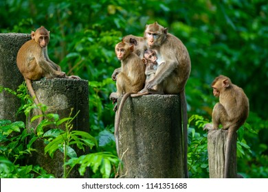 The family of monkeys zoo in THAILAND