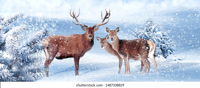 Family of noble deer in a snowy winter forest. Christmas artistic image. Winter wonderland. Banner format.