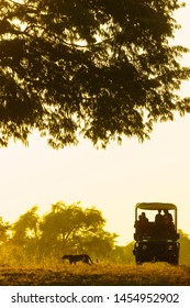 Family in an open game drive vehicle on an early morning safari, watching a leopard walk past through long grass.