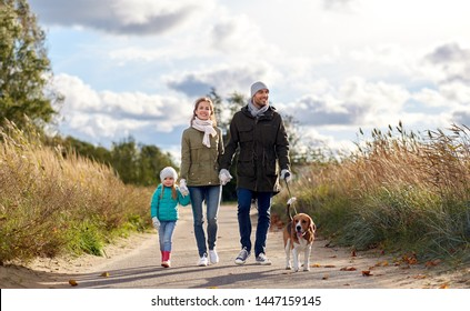 family, pets and people concept - happy mother, father and little daughter walking with beagle dog on leash in autumn