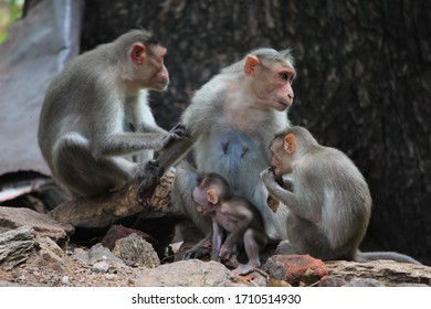a family pic of monkeys in Madurai, India