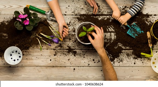 Family sits flowers in a pot. Spring and hobbies, family grows flowers together. Beauty and nature. Hobby home for whole family, entertainment with children, development and education. Flower ground