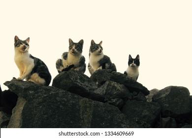 Family of stray cats. Herd of stray cats