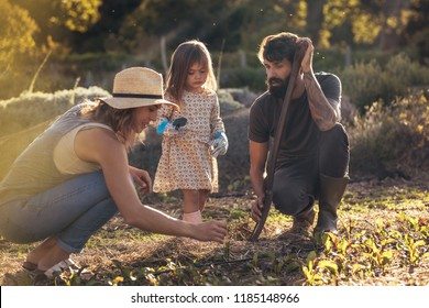 Family of three working in their farm. Father, mother and daughter gardening with tools.