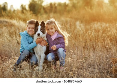 Family time. Brother and sister walk with a pet. Young dog breed Siberian Husky. Golden meadow in the rays of the setting sun.