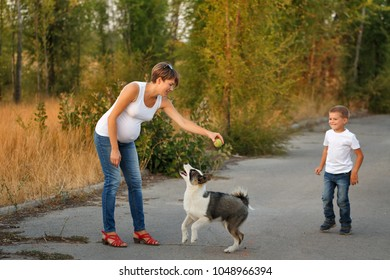 Family time. A pregnant mother and son play with a pet dog. Pedigree dog Yakut Husky.