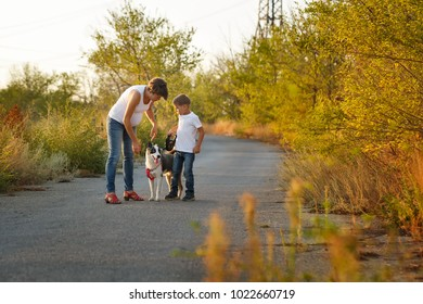 Family time. A pregnant mother walks with her son and a dog on a rural road. Pedigree dog Yakut Husky.