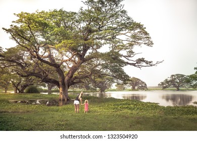 Family travelers mother and child daughter exploring wild nature reserve looking at wild bats Pteropus  or flying fox on trees on lake  during traveling vacation in tropical country Sri Lanka nearby