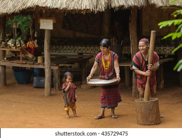 Family tribal being milling for rice