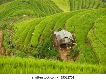 Family tribal wear costume working on rice fields of rice terraces in valley