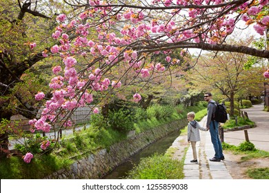 family of two, father and son, enjoying walk at philosopher's path in kyoto, japan, enjoying beautiful blooming sakura tree and hanami season at spring