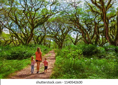 Family under green canopy in ancient forest. Woodland walk past giant trees with huge trunks, branches at Jawatan Benculuk Banyuwangi. Traveling with kids on summer vacation in Jawa island, Indonesia