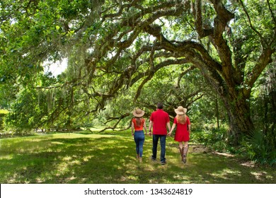 Family walking on the pathway under beautiful huge  oak trees on summer morning. People hiking in the park Magnolia Plantation and Gardens, Charleston, South Carolina, USA
