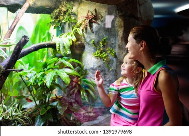 Family watching snake in zoo terrarium. Mother and child watch snakes in tropical safari park on summer vacation in Singapore. Kids observe animals. Mom and little girl look at reptiles behind glass.