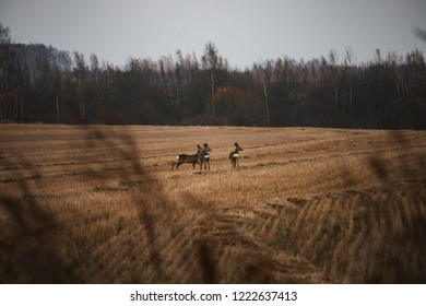 family wild animals running through field, deer in autumn landscape, ploughed land, harvest, hunting season is nature near border of forest, unexpected encounter with a fleeing animal, sanctuary