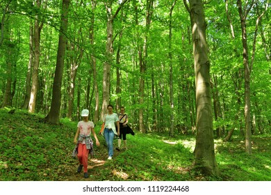Family women hiking tours in the woods in spring