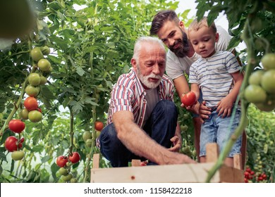 Familie arbeitet zusammen im Gewächshaus.Porträt von Großvater, Sohn und Enkel während der Arbeit im Familiengarten.