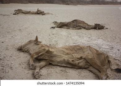 famine desert animal death starvation