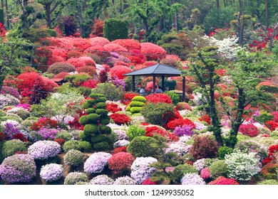"Famous azalea garden ""Okanbara azalea garden"" in Sukagawa-shi of Fukushima."