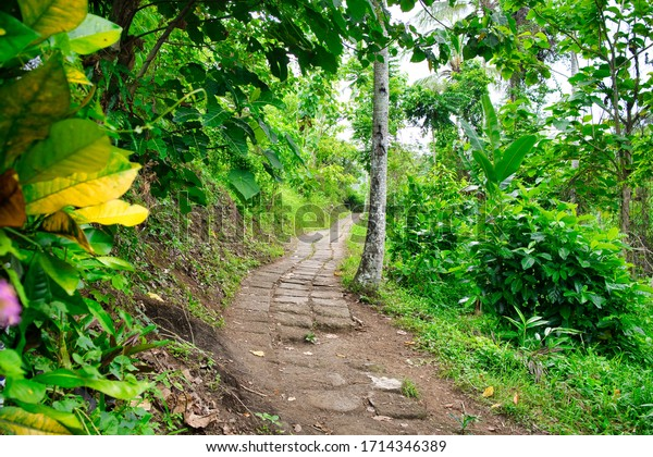 The famous Campuhan Ridge Walk, Natural Green Valley in Ubud, Bali, Indonesia.
