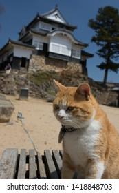 famous cat in front of bicchu matsuyama castle, okayama prefecture