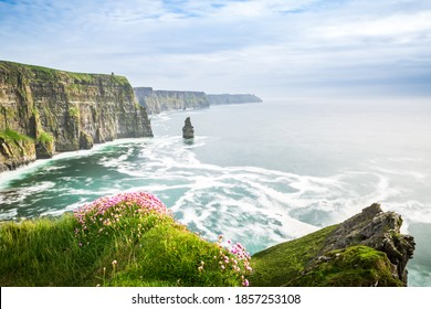 Famous Cliffs of Moher sea view in Ireland. Beautiful coast at the Ocean with Flowers in the front. Clear Atlantic water and Rocks in the Background.