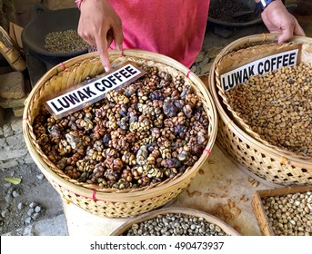 The famous coffee kopi luwak in Bali. Procedure to make the Luwak Coffee. Roasting to Remove the beans from the droppings of zibeth.