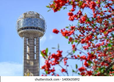 Famous Dallas Tower and Red Berries on Tree in Foreground (Spring) - Dallas, Texas, USA