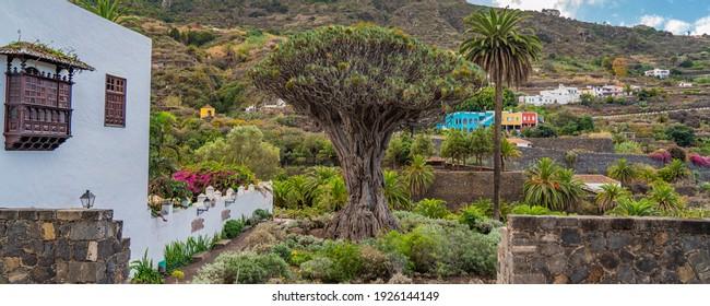 Famous Dragon Tree, Drago Milenario, in Icod de los Vinos Tenerife, Canary Islands, Spain, panorama view - Shutterstock ID 1926144149