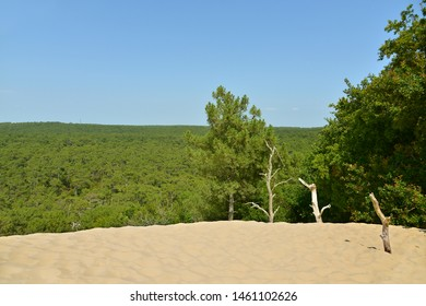 Famous Dune of Pilat and pine forest located in La Teste-de-Buch in the Arcachon Bay area, in the Gironde department in southwestern France