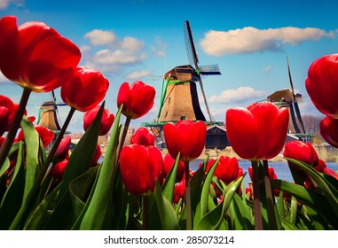 The famous Dutch windmills. View through red tulips on the Netherlands canals. Creative collage.
