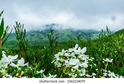 The famous Dzukou Valley, Nagaland.